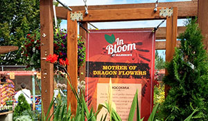 In Bloom- Flower of the Month Campaign